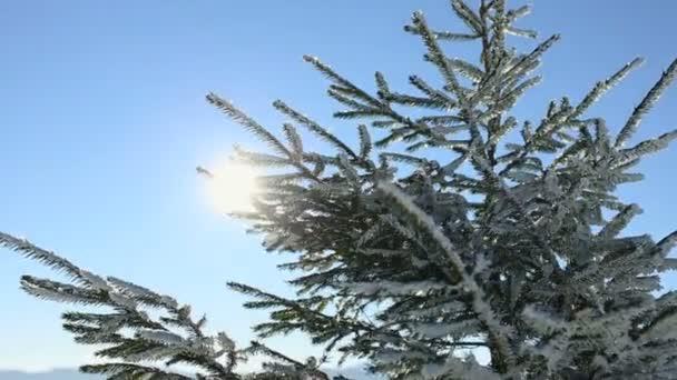 Sluneční svit přes větve pokryté sněhem