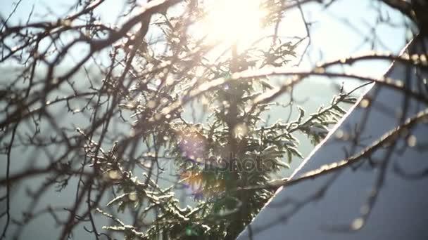 Lustro del sole attraverso i rami di un albero coperto di neve.