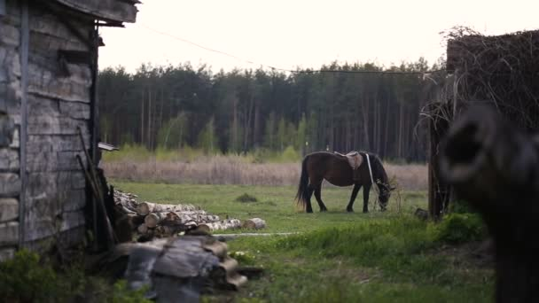 Hnědý kůň, jíst trávu a chůzi na venkovské oblasti