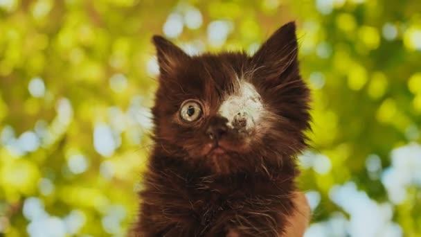 Bekend Blind de Eenogige kitten. Naden. Zonder ogen. Een recent ZP67