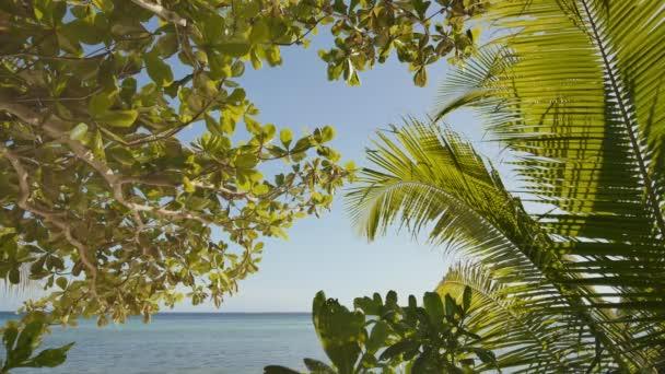 Tropický motiv. Exotická příroda z Asie. Filipíny. Palmové stromy s výhledem na moře