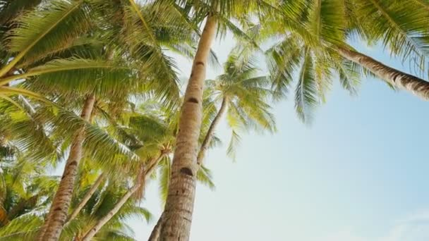 Palm trees against the background of a light blue sky in clear weather. Philippines.