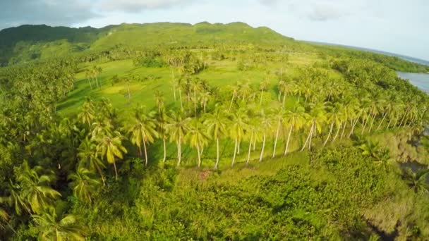 Philippine nature. Palm plantations and jungle with hills and lakes. Bohol Island.