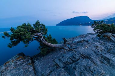 tree on top of a cliff/ View from Cape Plaka to Ayu-Dag mountain, Utes, Crimea