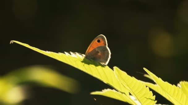 Motýl na rostliny mají v slunečný jarní den