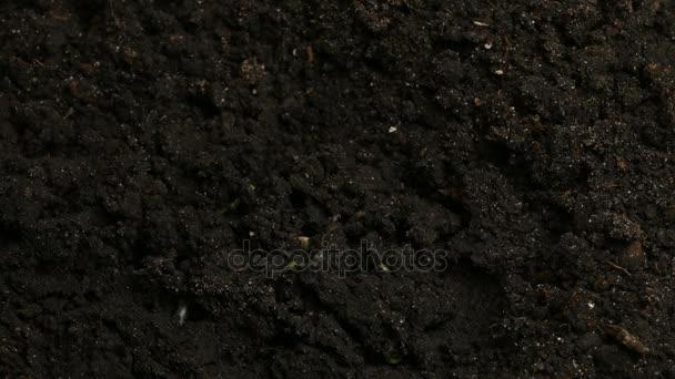 Növekszik a zöld uborka növények mezőgazdasági tavaszi Timelapse