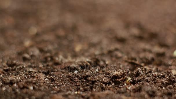 Rostoucí zelené hořčice rostliny zemědělství jarní Timelapse