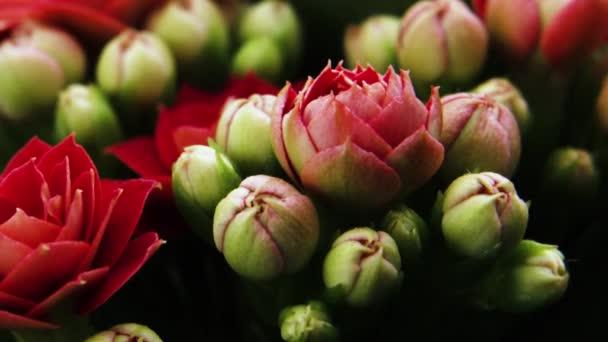 Virágmegnyitó tavasszal. Gyönyörű tavaszi Red Blossom nyitott időköz, Extreme közeli.