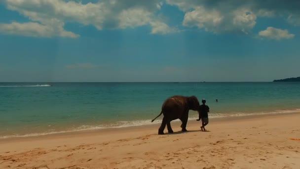 Elephant on Bang Tao Beach. Phuket Island. Thailand