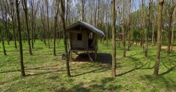 Anténa: Opuštěné boudy v háji gumovník. Hevea