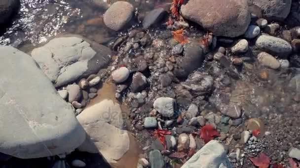 Kameny a červené listy ve vodě