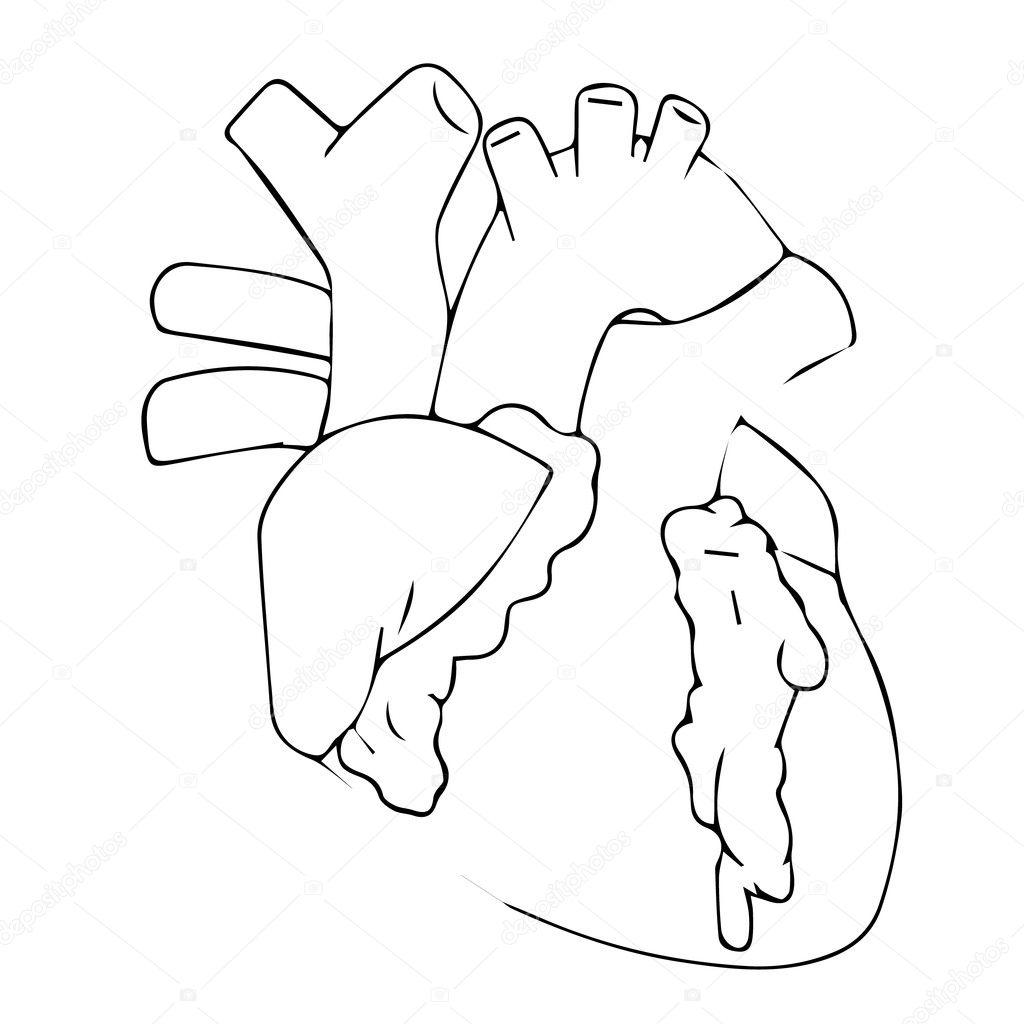 Heart Vector Illustration Human Heart Heart Icon Heart Logo