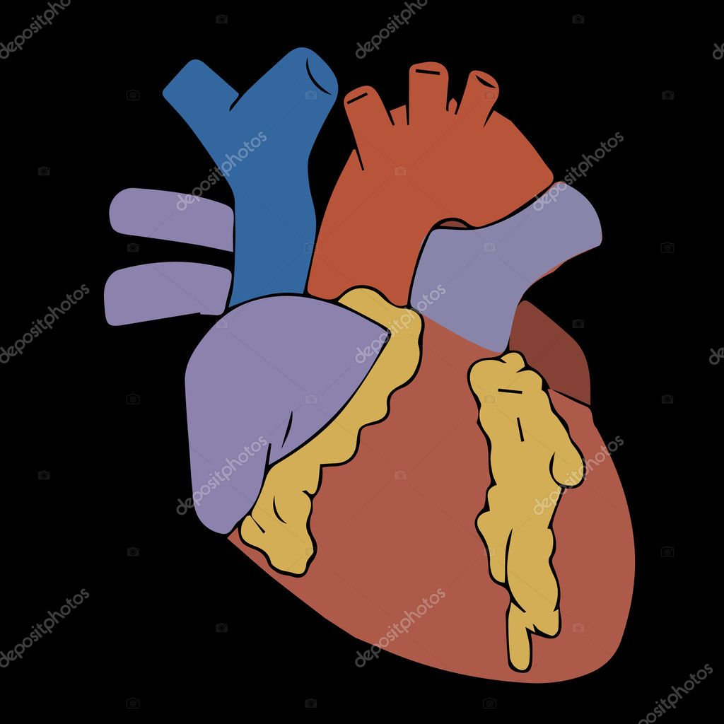 Heart Vector Illustration Human Heart Heart Icon Heart