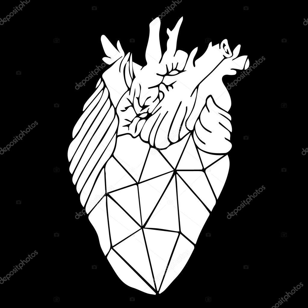 Heart vector illustration. Human heart. Heart icon. Heart logo ...