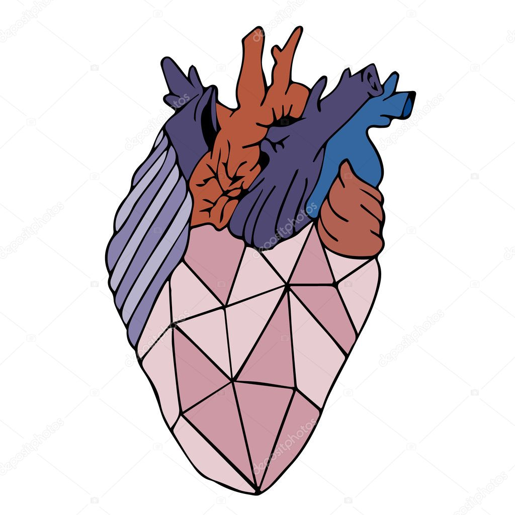 Heart Vector Illustration Human Heart Heart Icon Heart Logo