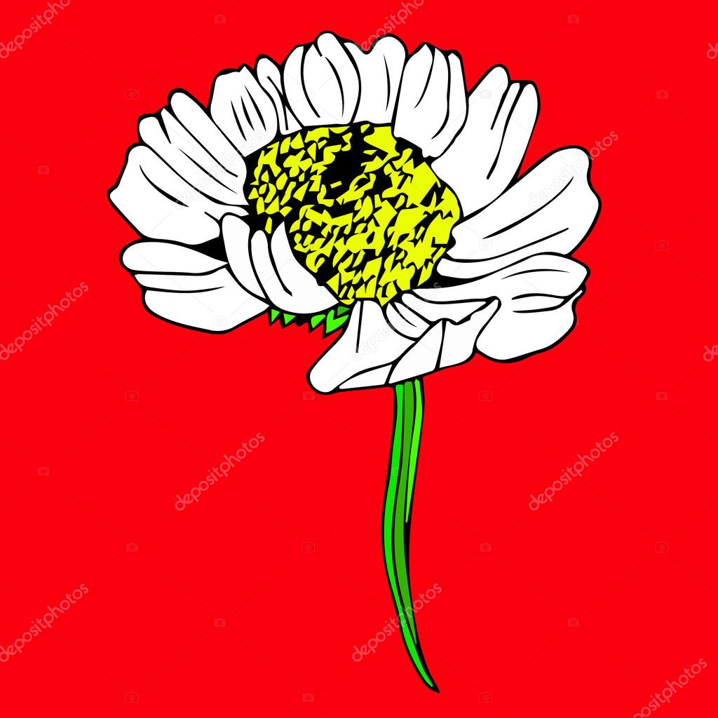 Chamomile Flower Icon Daisy Art Background Daisy Nature Objects
