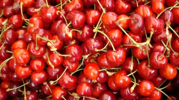 Red and fresh cherries on the market: health, food, freshness