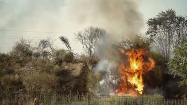 šířit plameny ohně v lese