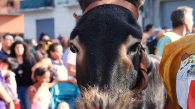 close up on donkey race