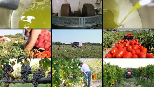 olivový olej, rajčata, hrozny Multiscreen zemědělství v jižně od Itálie
