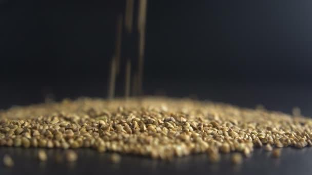 pours buckwheat grain