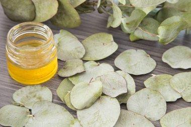 Eucalyptus leaves and oil (Eucalyptus cinerea)