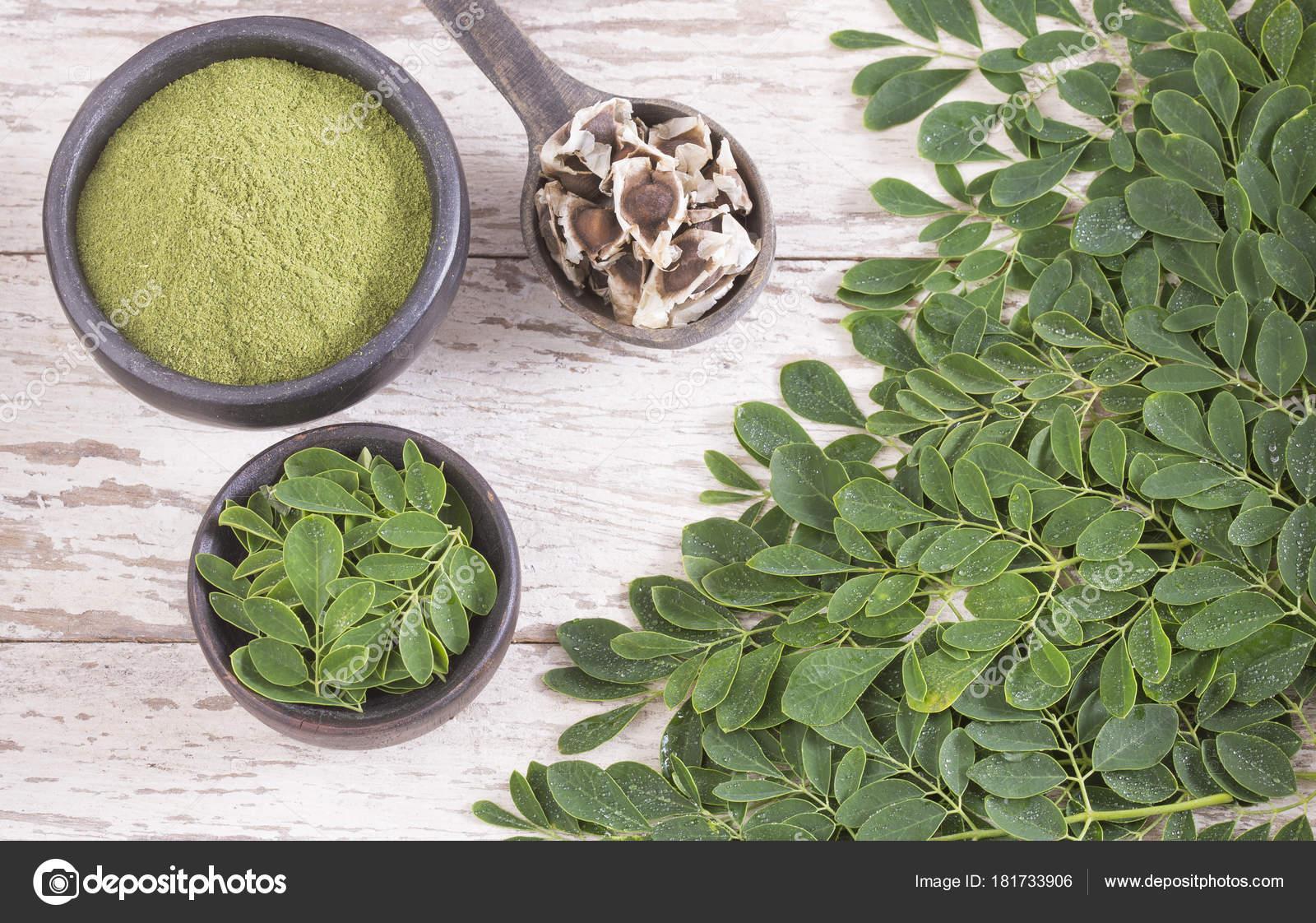 Moringa Blatter Samen Und Pulver Moringa Oleifera Stockfoto