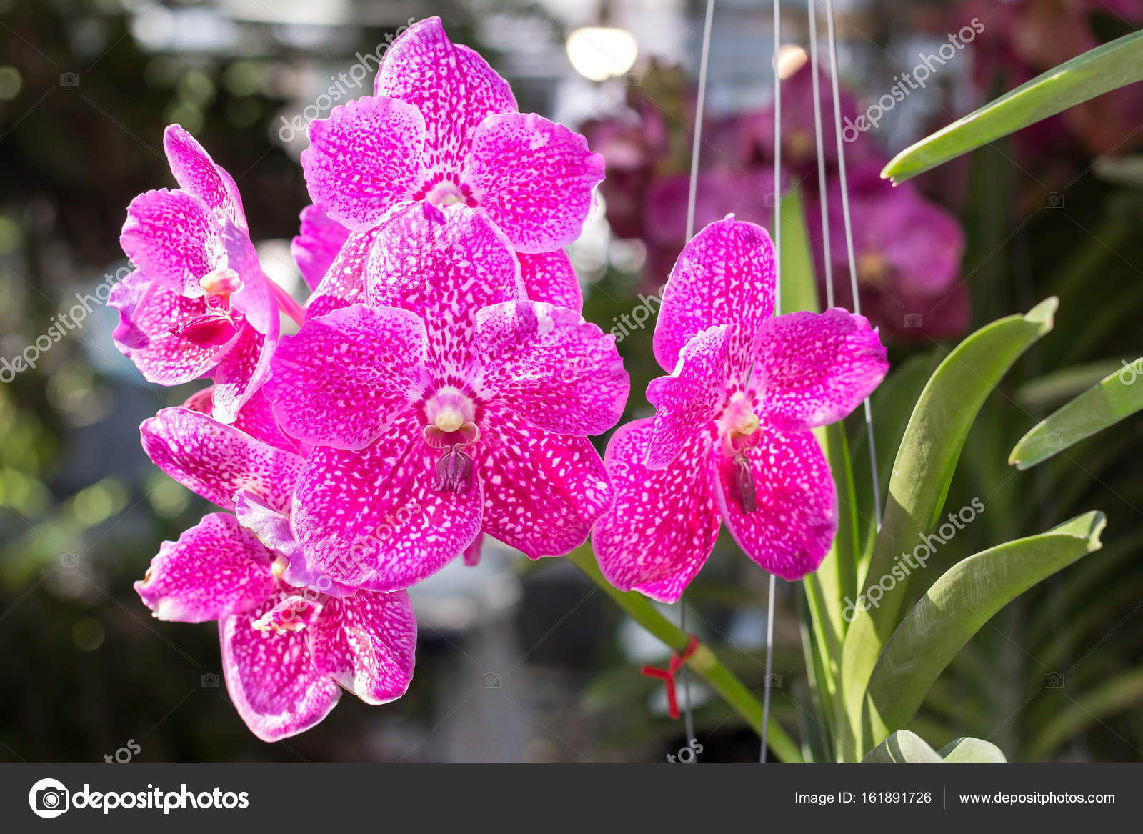 Цветок зимой фото