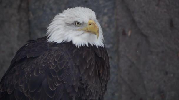 ein großer Adler in freier Wildbahn