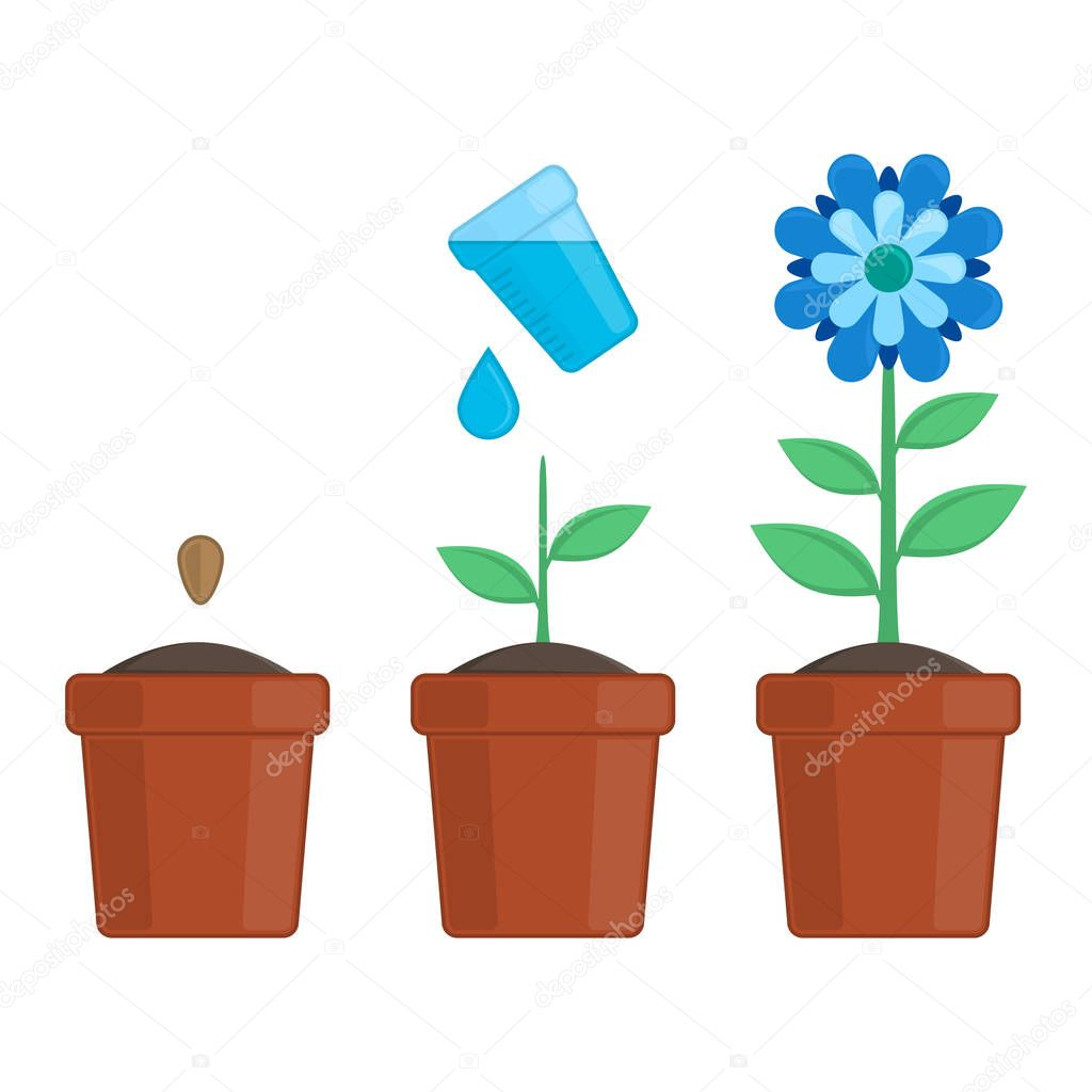 Plant growing stages.