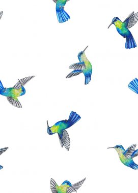 seamless gentle hand drawn in pencils hummingbird pattern