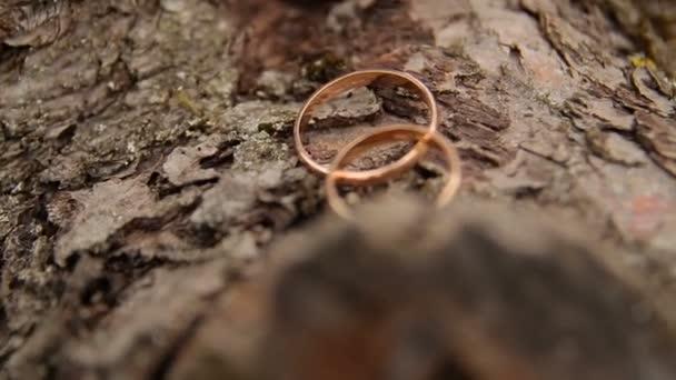 wedding rings on wooden stump