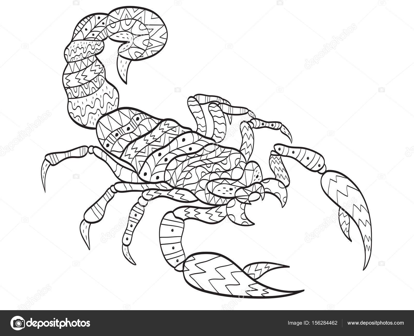 Imágenes Una Escorpión Para Dibujar Vector De Escorpión