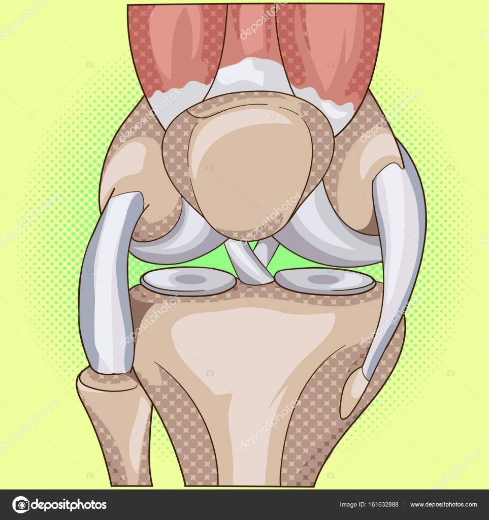 Anatomy. Structure knee joint vector pop art design — Stock Vector ...