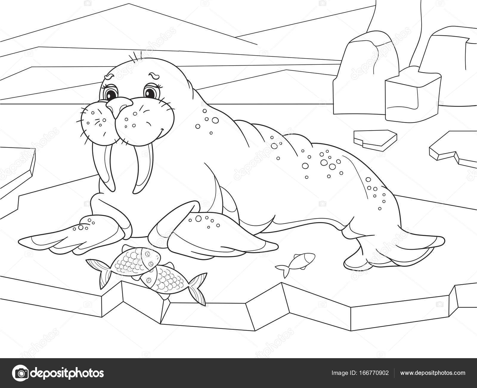 El morsa juguetones mamíferos marinos con una distribución ...
