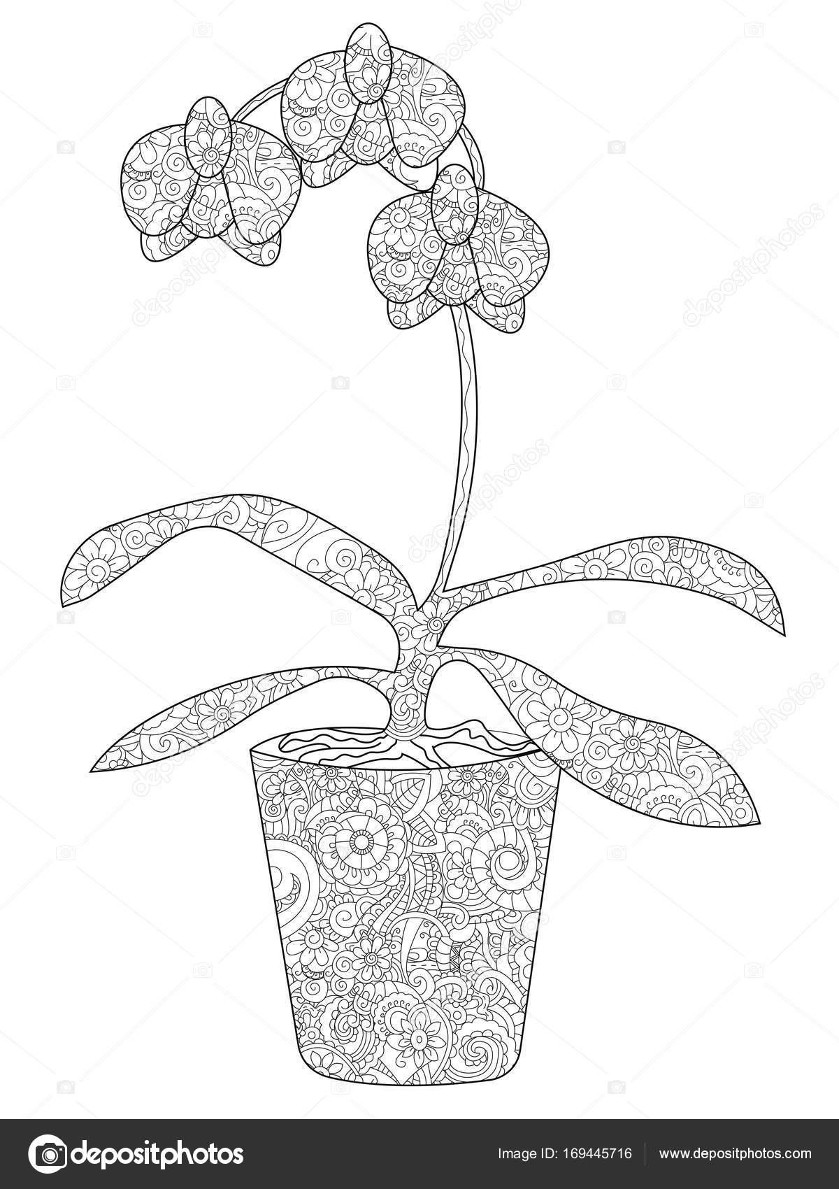 Orquídea de la flor en una maceta para colorear trama para adultos ...