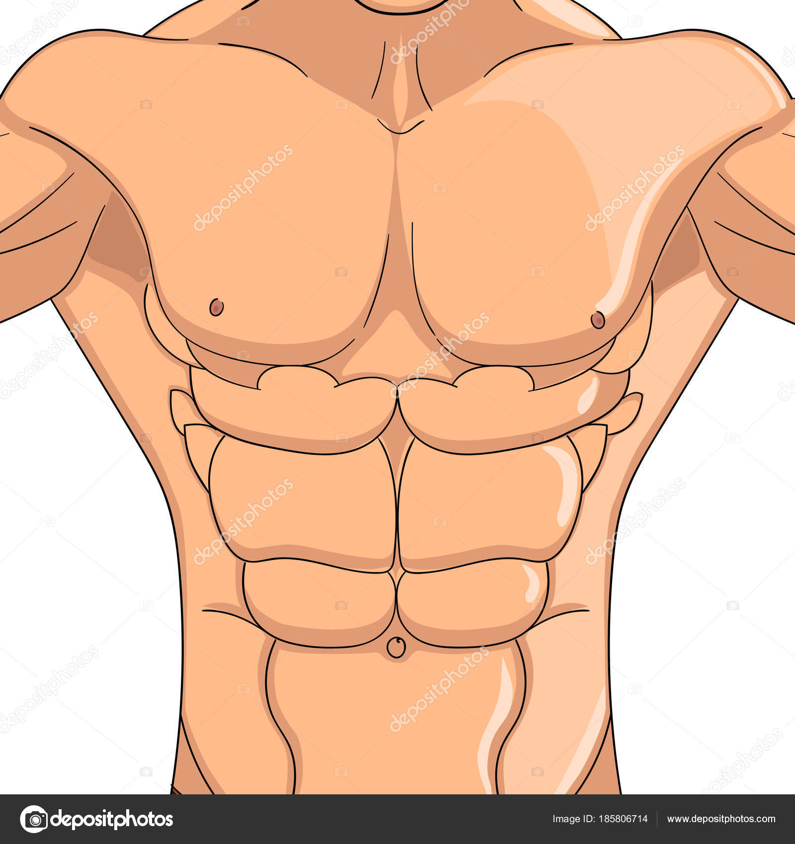 Bodybuilder, anatomy of the abdominal muscles man. Vector object on ...