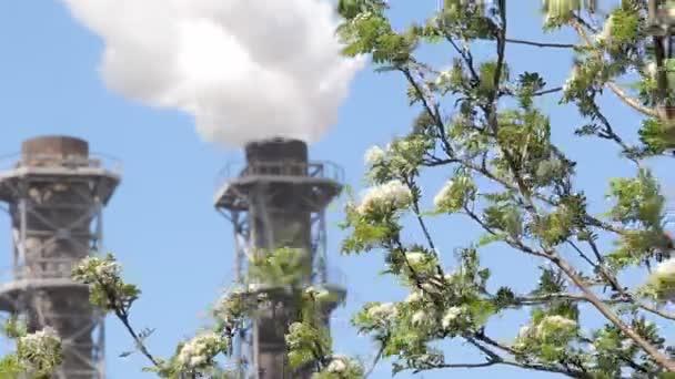 Weißer Rauch quillt aus den Werksrohren gegen den blauen Himmel