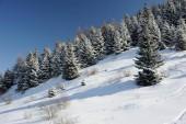 Fianco di una montagna nelle Alpi