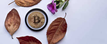 Gold bitcoin on autumn leaves on white background. Design elements for autumn.
