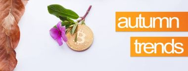 Design elements for autumn. Cover image for autumn. Bitcoin and pink flower with fall leaves in the corner