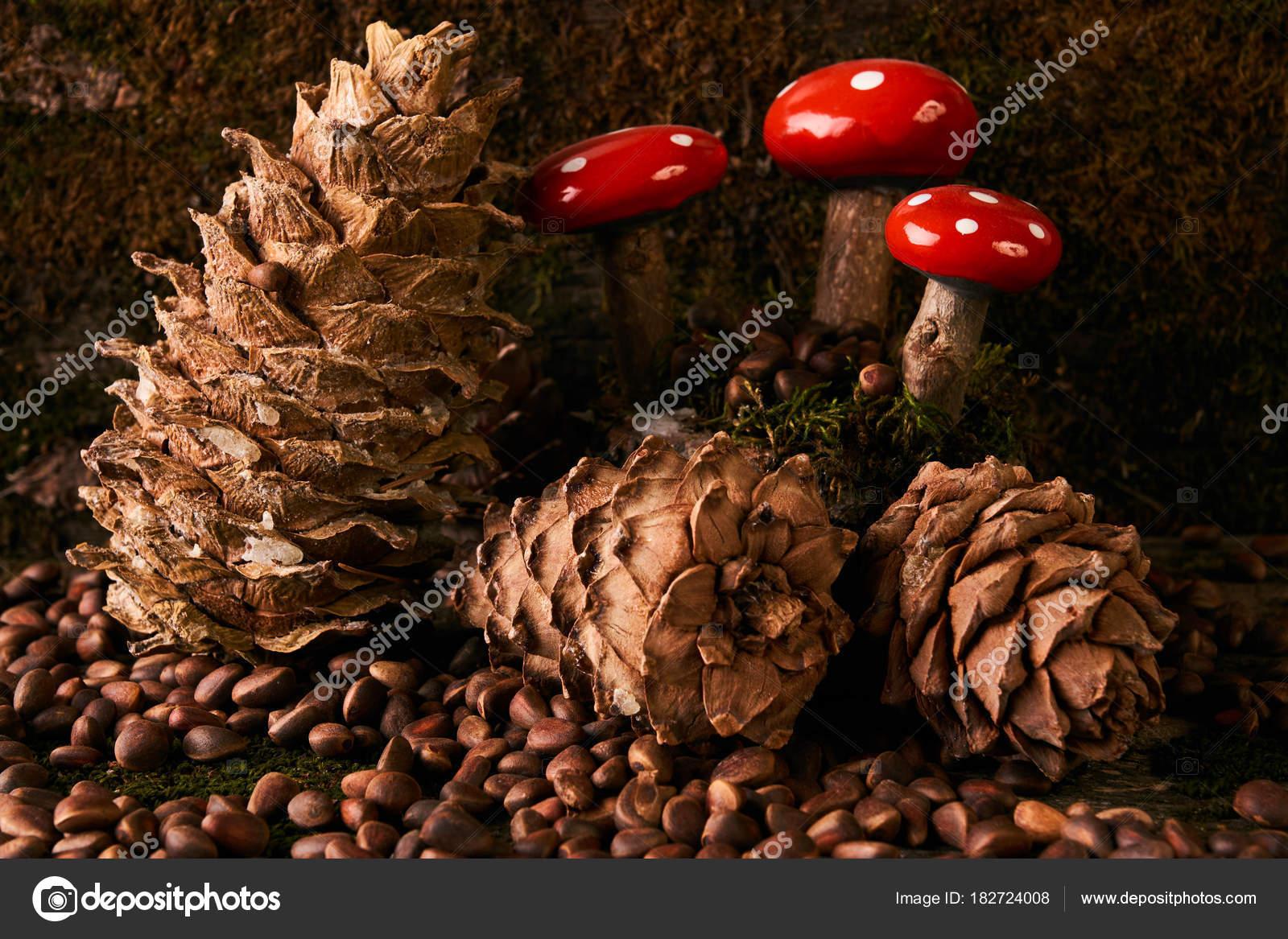 сосновики грибы фото