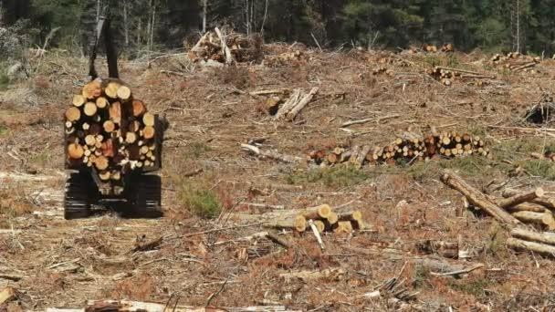 zadní pohled na traktor přepravovaný z borových kládů nedaleko Tarraleah v Tasmánii