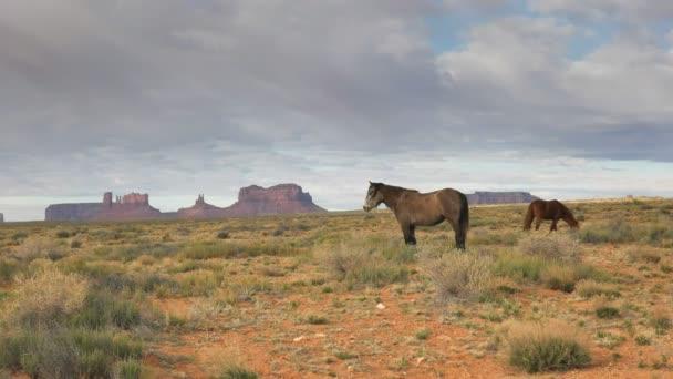 profilový snímek koně se sedlovou minou v údolí památníku