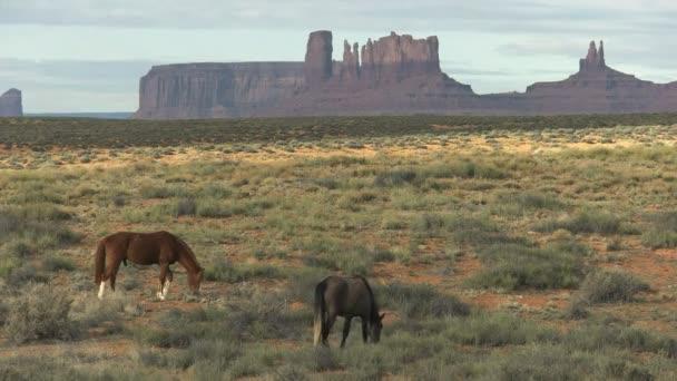 ranní záběr dvou koní pasoucích se na památkovém údolí v Utahu