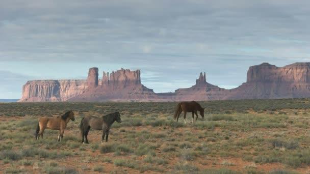 ranní záběr tří koní se vzdálenou sedlovou minou v údolí památníku