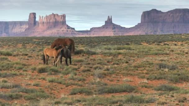 dva koně bojující tím, že kopat navzájem v památníku údolí