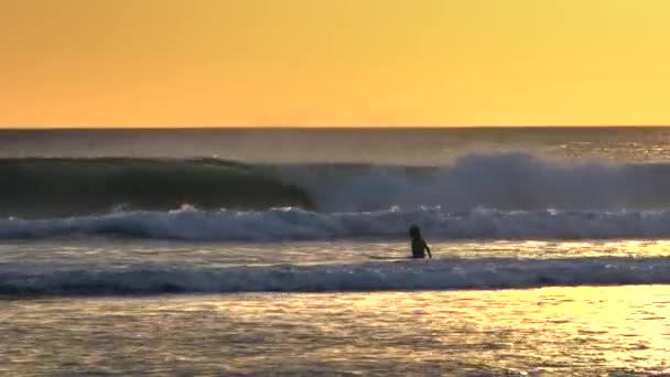 sunset shot of a young surfer wading out to go surfing kuta, bali