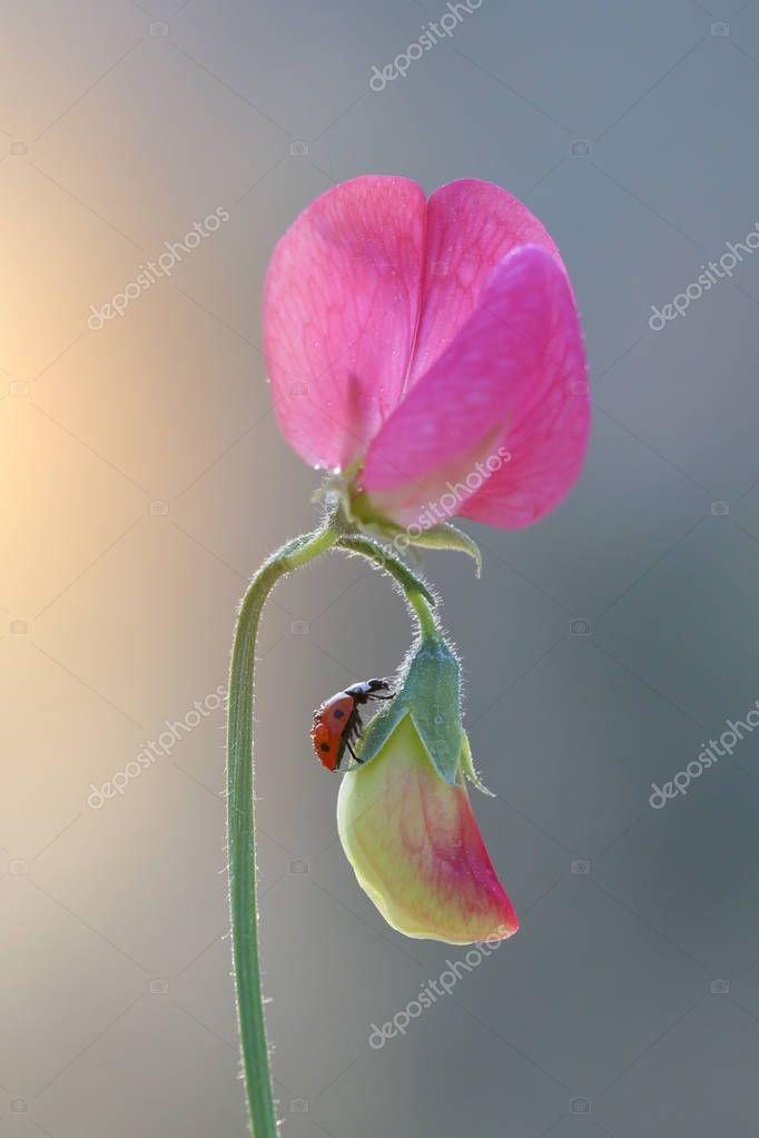 Naughty little red ladybug