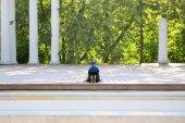 Fotografie Krásný Páv pózuje v koupelnách royal ve Varšavě